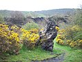 Iron slag and gorse - geograph.org.uk - 782259.jpg