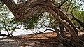 Isla Ixtapa. - panoramio.jpg
