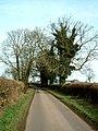 Ivy clad trees - geograph.org.uk - 111042.jpg