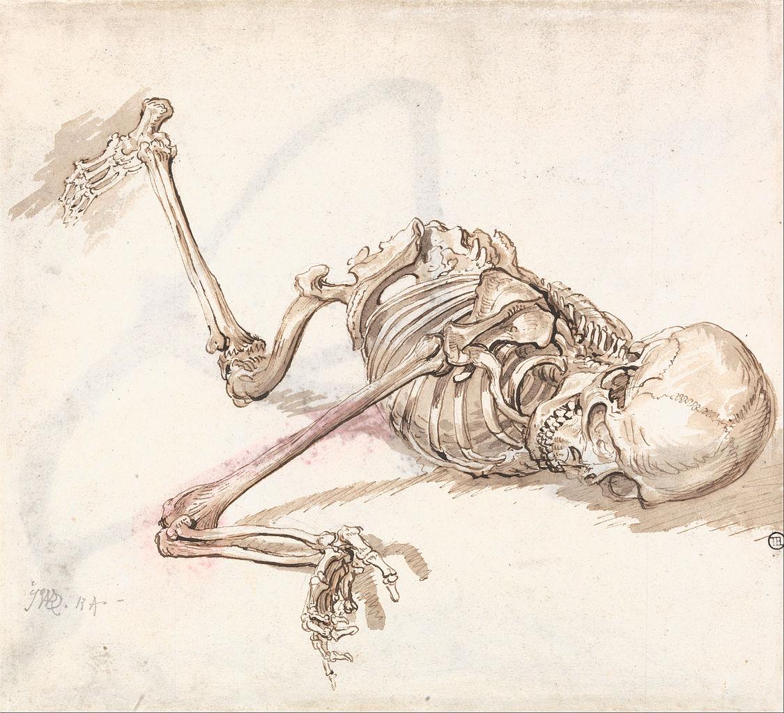 file:james ward - a human skeleton - google art project, Skeleton