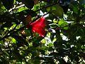 Japanese nature red flower.jpg