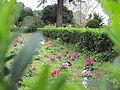 Jardim Botanico da Ajuda (14005588012).jpg