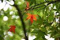 Jardin Japonais, Toulouse (8103236415).jpg