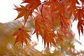 Jardin japonais Toulouse (8602183057).jpg