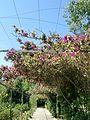Jardines de Alfàbia (09).jpg