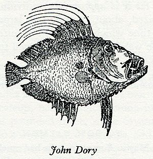 John Dory - Wood engraving of John Dory in Eliza Acton's Modern Cookery for Private Families, 1845