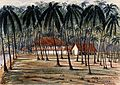 John Edmund Taylor, Under the Cocoa Nut Trees. The Bungalows. Tanjong Katong, Singapore. (1879, Wellcome V0037492).jpg
