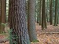 Joyce Kilmer Natural Area (Revisited) (1) (8085164462).jpg