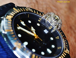 http://upload.wikimedia.org/wikipedia/commons/thumb/d/d9/Jumping_spider_watches_the_time_%287140530999%29.jpg/313px-Jumping_spider_watches_the_time_%287140530999%29.jpg?uselang=nl
