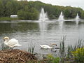 Kalamazoo swans.JPG