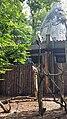 Kaliningrad Zoo - Neophron percnopterus.jpg