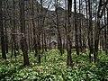 Kamikochi 上高地 - panoramio (1).jpg