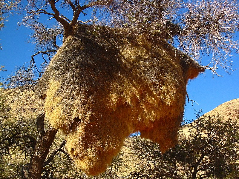 File:Karas Region, Namibia - panoramio (22).jpg