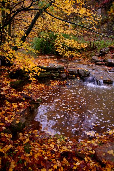File:Kellys-creek-1 - West Virginia - ForestWander.png
