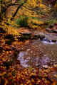 Kellys-creek-1 - West Virginia - ForestWander.png