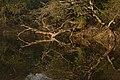 Keoladeo National Park, Bharaatpur, Rajasthan.jpg