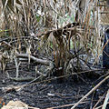 Kissimmee Prairie Preserve State Park Florida - Kilpatrick Hammock Controlled Burn.jpg