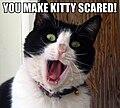 Kittyscaredlolcat.jpg