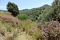 Kreta-Villa Triada01.jpg