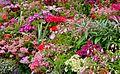 Kukkiahelsinkikesäsuomi57214757417515559Skotlanti 2006 066.jpg