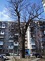 Kyiv Krister Oak.jpg