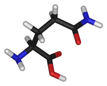 Chemical structure of the amino acid glutamine