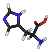 L-histidine-3D-sticks2.png