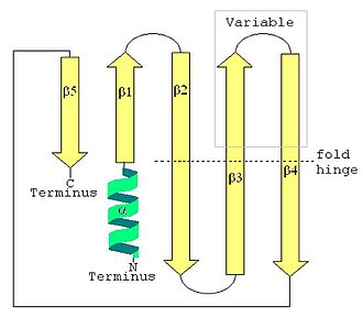 LSm - LSm secondary structure showing the N-terminal alpha helix and the five-strand antiparallel beta sheet.