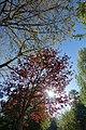 Lac Daumesnil @ Bois de Vincennes @ Paris (26140711514).jpg