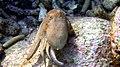 Laika ac Octopus (11879647545).jpg