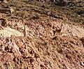 Lama guanicoe (48338802417).jpg
