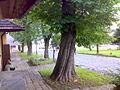 Lanckorona3.jpg