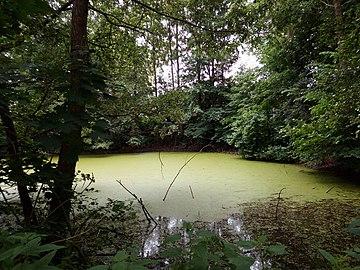 Landschaftsschutzgebiet Warmenau-Ufer LSG OS 00019 Datei 43.jpg