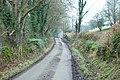 Lane to Llandderfel beside Gwerclas - geograph.org.uk - 1692053.jpg