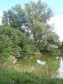 Large pond at Akenham - geograph.org.uk - 548962.jpg