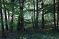Lasy Łączańskie - panoramio (35).jpg