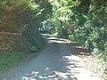 Leafy Lane Clahane Hill - geograph.org.uk - 491407.jpg