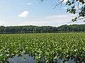 Leesylvania State Park.JPG