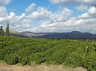 Orchard - Image: Lemon Orchard in the Galilee by David Shankbone