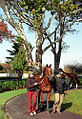 "Lexington Kentucky - Keeneland Race Track ""Paddock"" (2144599333) (2).jpg"
