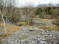 Limestone Woodland - geograph.org.uk - 364136.jpg