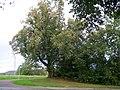 Linden mit Kreuz an der Klostersteige.jpg