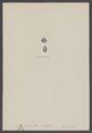 Lingula antiqua - - Print - Iconographia Zoologica - Special Collections University of Amsterdam - UBAINV0274 005 13 0026.tif