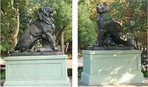 Lion Lioness.jpg