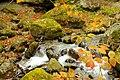 Little waterfall - panoramio (1).jpg