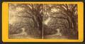Live Oak Avenue, Bonaventure Cemetery, Savannah, Ga, from Robert N. Dennis collection of stereoscopic views.png