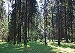 Losiny Ostrov National Park - Korolev, Russia - panoramio.jpg