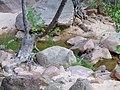 Lower Pine Creek Hike - panoramio (1).jpg