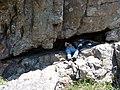 Lucas descansando en la cueva. - panoramio.jpg