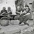 Lupljenje češp v Medani 1953.jpg